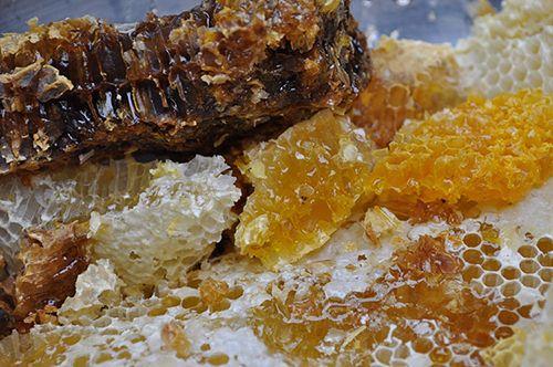 phần sáp chứa mật ong