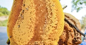 sáp ong ngâm rượu