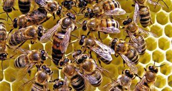 Vai trò của ong thợ