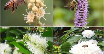 Mật ong có bọt khí trắng