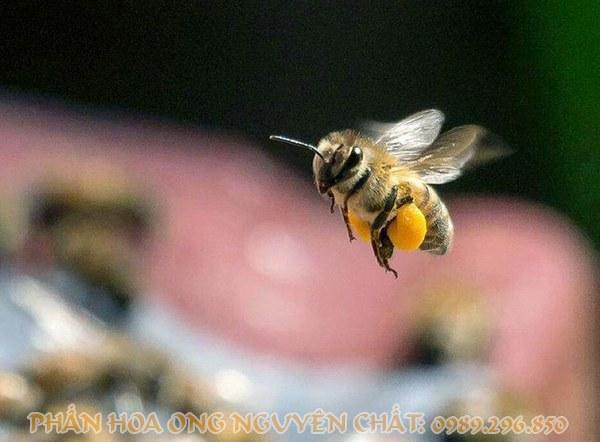 phấn hoa ong trong làm đẹp
