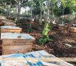 trang trại mật ong tây nguyên